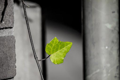 Leaf, Green, Nature, City Green, Green Leaf, Plant