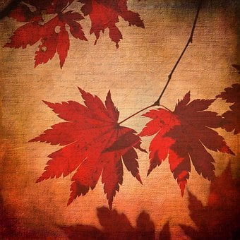 Texture, Background, Maple, Maple Leaves, Leaves