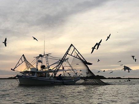 Shrimp, Boat, Dawn