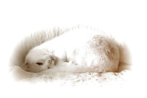 Cat, White, Silhouette, Black And White, White Cat