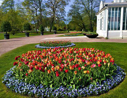 Tulips, Gothenburg, The Garden Society Of Gothenburg