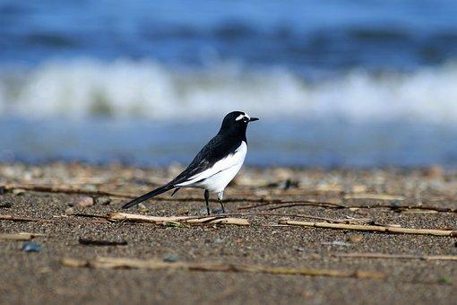Animal, River, Sea, Beach, Wave, Sandy, Bird