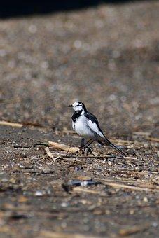 Animal, River, Sea, Beach, Sandy, Bird, Wild Birds