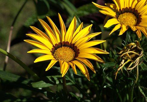 Flower, A Flower Garden, Plant A Garden, Yellow Flower