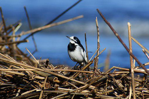 Animal, River, Sea, Beach, Driftwood, Twigs, Bird
