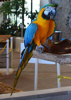 Macaw, Animal Exhibit, Bird, Animal, Bird Exhibit