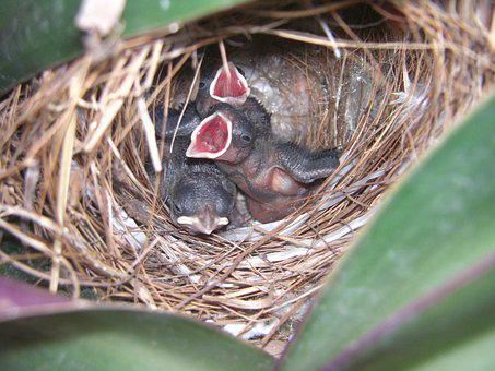 Nest, Birds, Young, Wild, Incubate, Eggs, Hyip, Chick