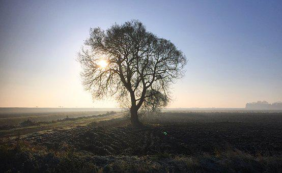 Cold, Morning, Fens, Landscape, Tree, Winter, Frost