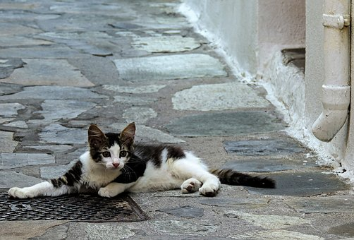 Cat, Cats, Kitten, Kos, The Island Of Kos, Greece, Road