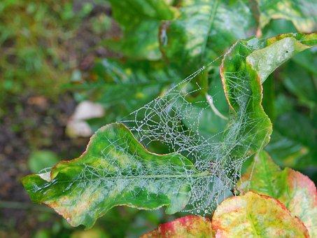 Landscape, Nature, Tree, Spider, Web, Leaves, Autumn
