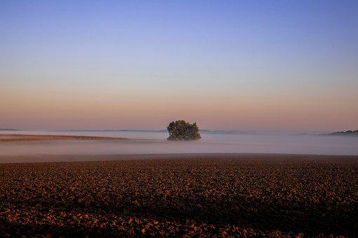 Autumn Landscape, Lonely Tree, Critter, Fog, Nature