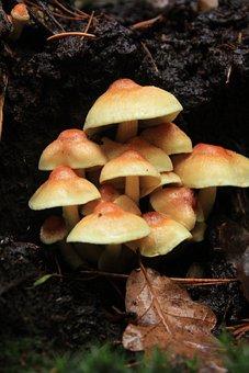 Mushroom, Park, Nature, Season, Leaf, Green, Forest