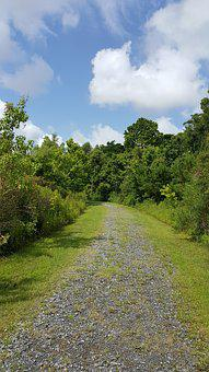 Conservation Area, Trees, Nature, Conservation, Area
