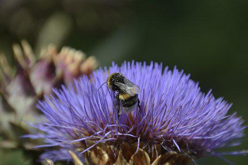 Insect, Blossom, Bloom, Artichoke, Nature, Flower