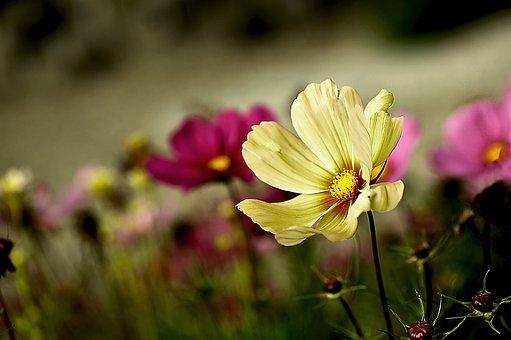 Garden Flowers, Space, Onętek, Small Flowers