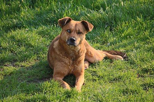 Dog, Lying, Hybrid, Lying Dog, Pet, Sunlight, Attention