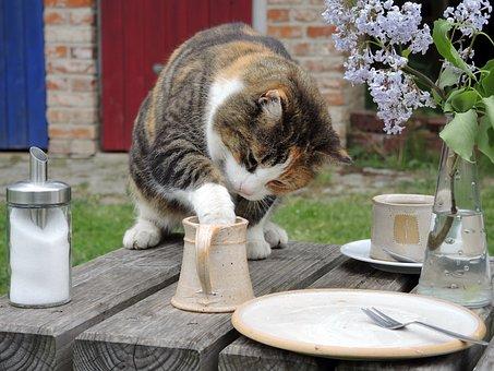 Cat, Sweet Tooth, Milk Thief