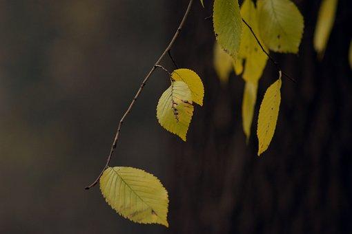 Autumn Gold, Yellow Leaves, November, Tree, Park