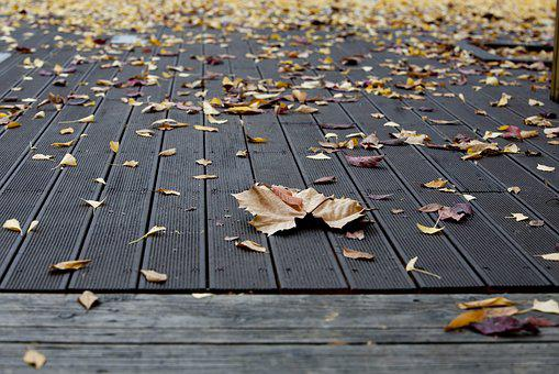 Plata One, Autumn, Leaves, Yellow, Leaf, The Leaves