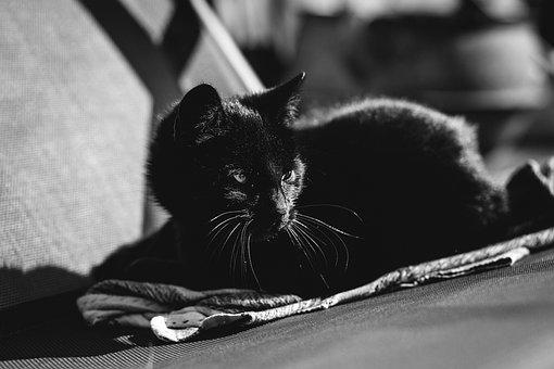 Animals, Black And White, Background, Beautiful, Black