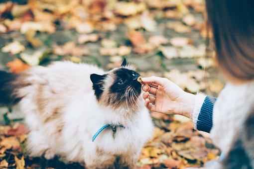 Animals, Food, Drinks, People, Autumn, Background