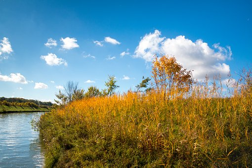 Reed, Golden, Channel, Autumn, Blue Sky, White Clouds