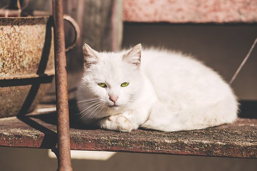 Animals, Adorable, Beautiful, Breed, Cat, Clean