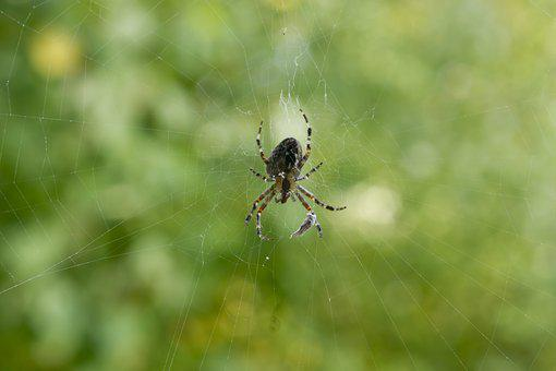 Spider, Cobweb, Nature, Close, Network, Arachnid