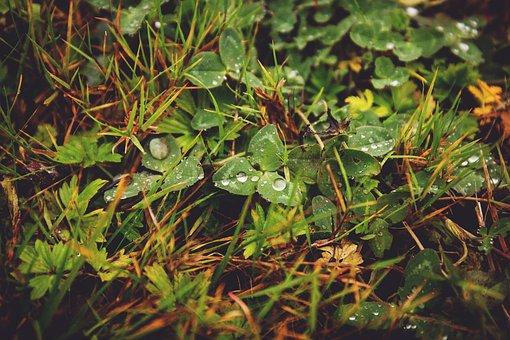 Nature, Autumn, Brown, Clover, Dew, Fall, Grass, Green