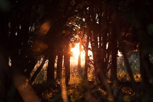 Nature, Barbed, Evening, Forest, Gold, Golden, Grass
