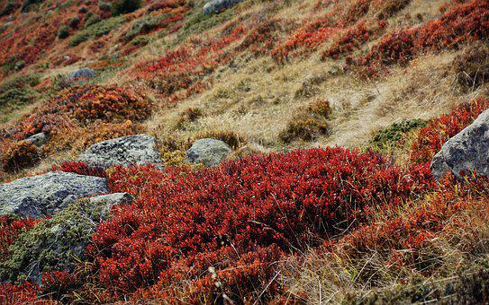 Bushes, Grass, Landscape, Grasses, Hedge, Shrubs