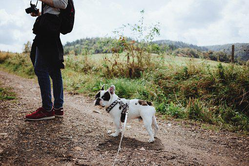 Animals, Nature, People, Autumn, Backpack, Bieszczady