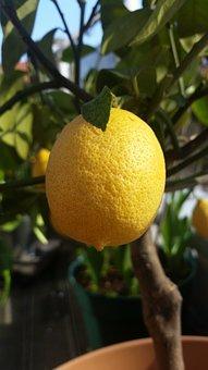 Lemon, Yellow, Citrus Fruits, Sour, Vitamins, Fruit