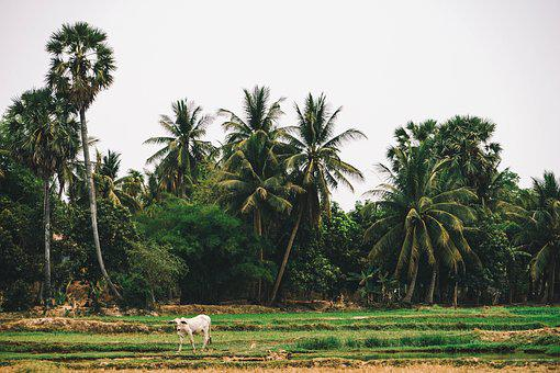Agricultural, Agriculture, Asia, Asian, Cambodia