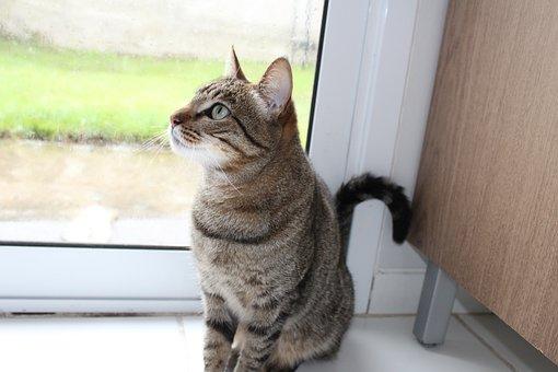 Cat, Grass, Feline Look, Pet, Feline Stopped, Animals