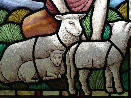 Stained Glass, Lamb, Christian, Church, Window, Sheep
