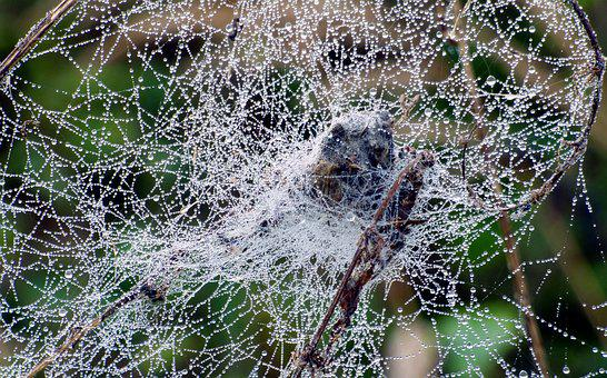 Canvas, Spider, Drops, Water, Nature, Forest, Bear