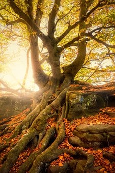 Tree, Quaint, Overgrown, Nature, Moss, Autumn