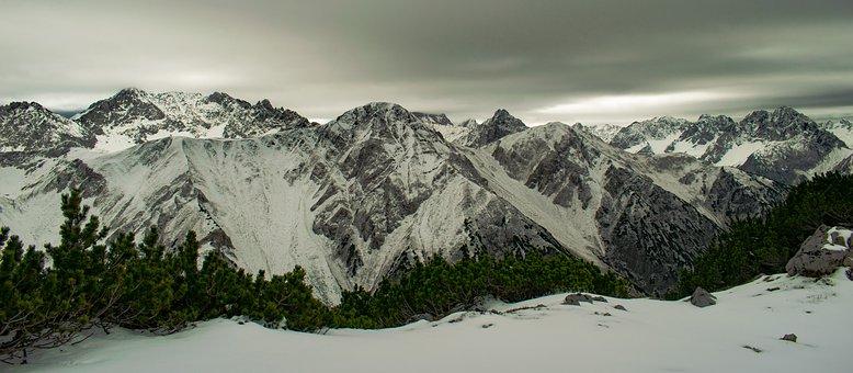 Alps, Autumn, November, Mountains, Dwarf Pine, Austria