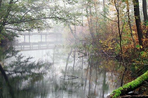 Bridge, Wooden, Old, Green, Lake, The Fog, Morning