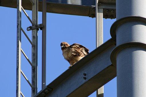 Animal, Sky, Radio Tower, Bird, Wild Birds