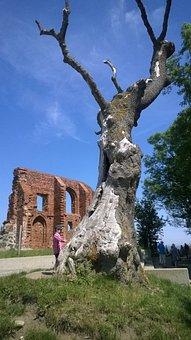 Tree, Trzęsacz, The Ruins Of The
