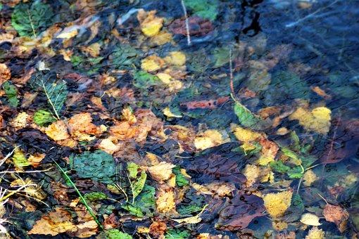 Leaves, Autumn, Water, Underwater, Atmosphere, Wet