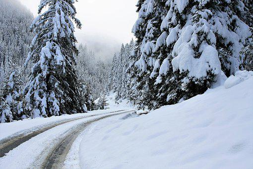 Snow, White, Tree, Forest, Mountains, The Alps, Way