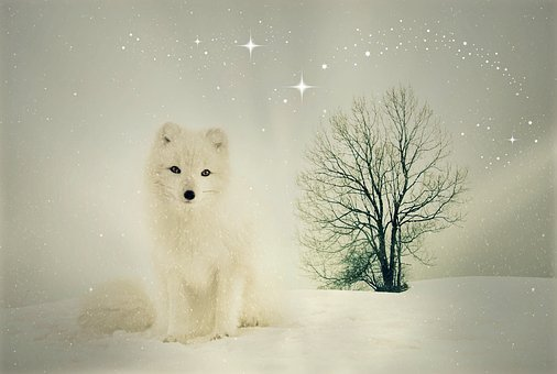 Fuchs, Animal, Wild Animal, Winter, Snow, Animal World