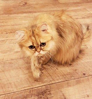 Cat, Yellow Cat, Animal, Pet, Feline, Domestic, Cute
