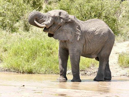 Elephant, Nature, Experience, Safari, Tanzania, Shower