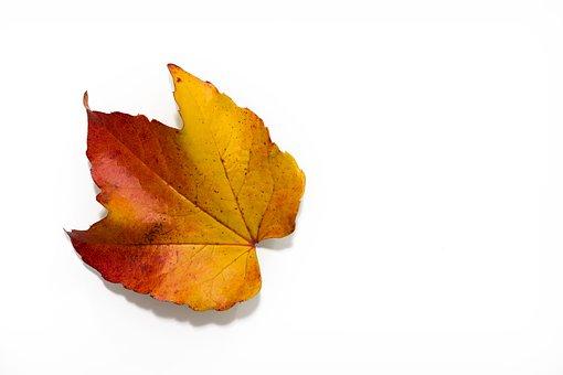 Autumn, Leaves, Colorful, Fall Leaves, Fall Foliage
