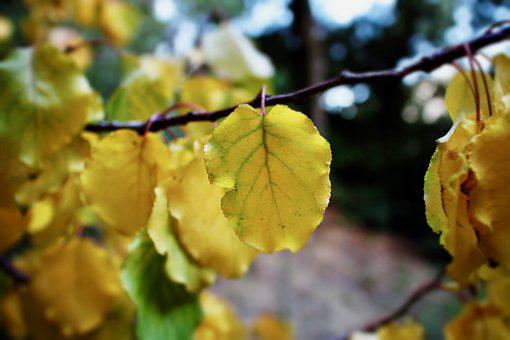 Leaves, Yellow Leaves, Autumn, Winter, Forest