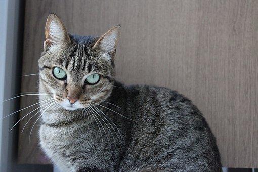 Cat, Eyes, Kitten, Gata, Animals, Feline
